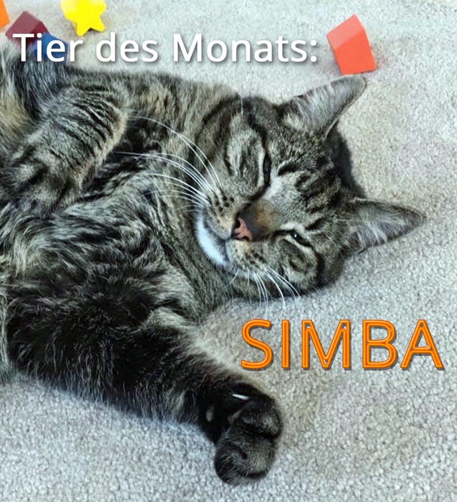 Bild: Kater SIMBA