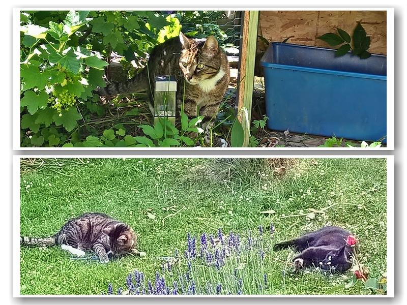 Abb: Malik und Molly spielen im Garten