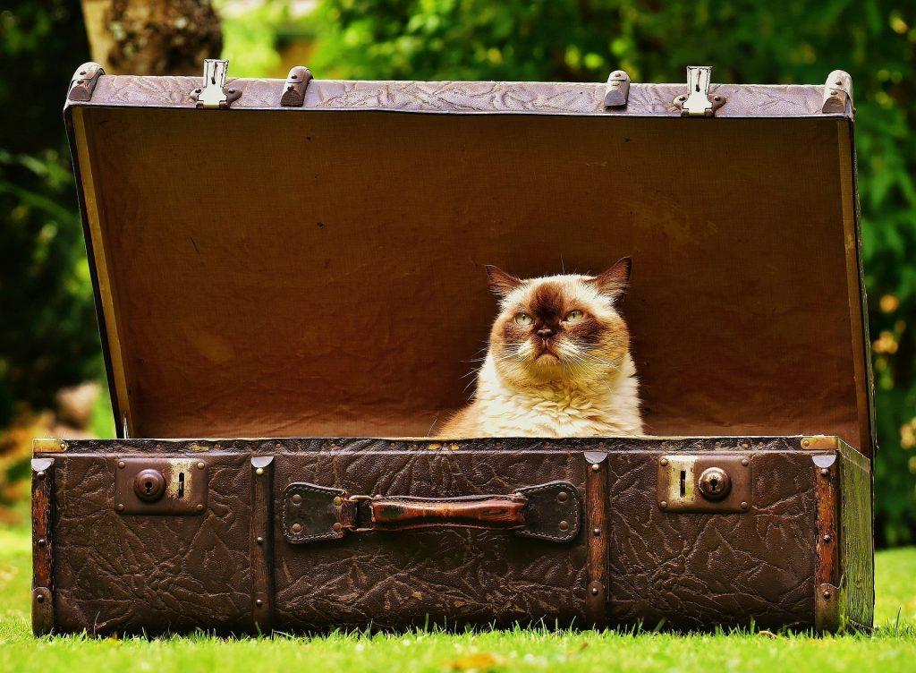 Abb: Katze im Koffer