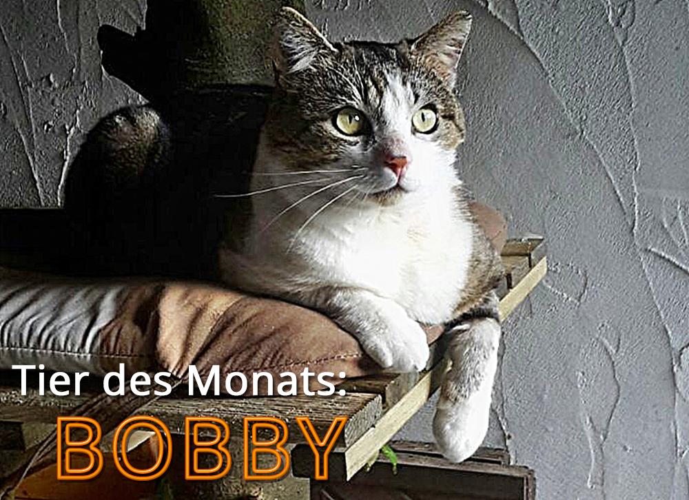Abb: Kater BOBBY