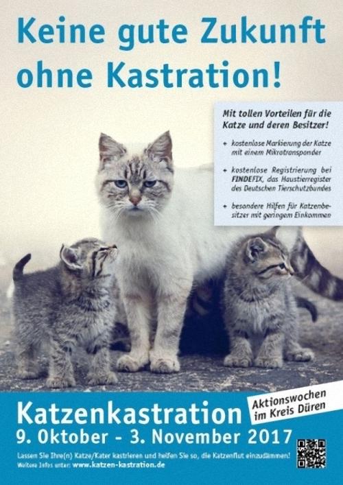 Abb.: Plakat zur Katzenkastrationsaktion Sepember-Oktober 2017