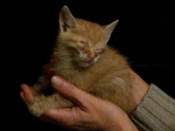 In diesem schrecklichen Zustand wurde die kleine Toulouse gefunden