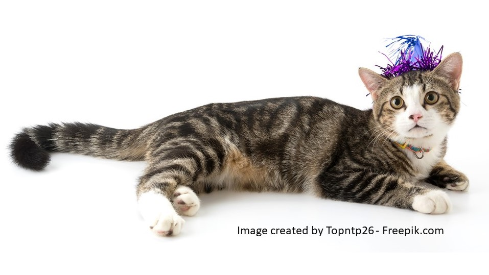 Katze mit Silvesterhut