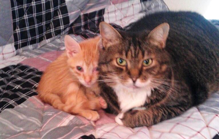Katze Toulouse mit Freund