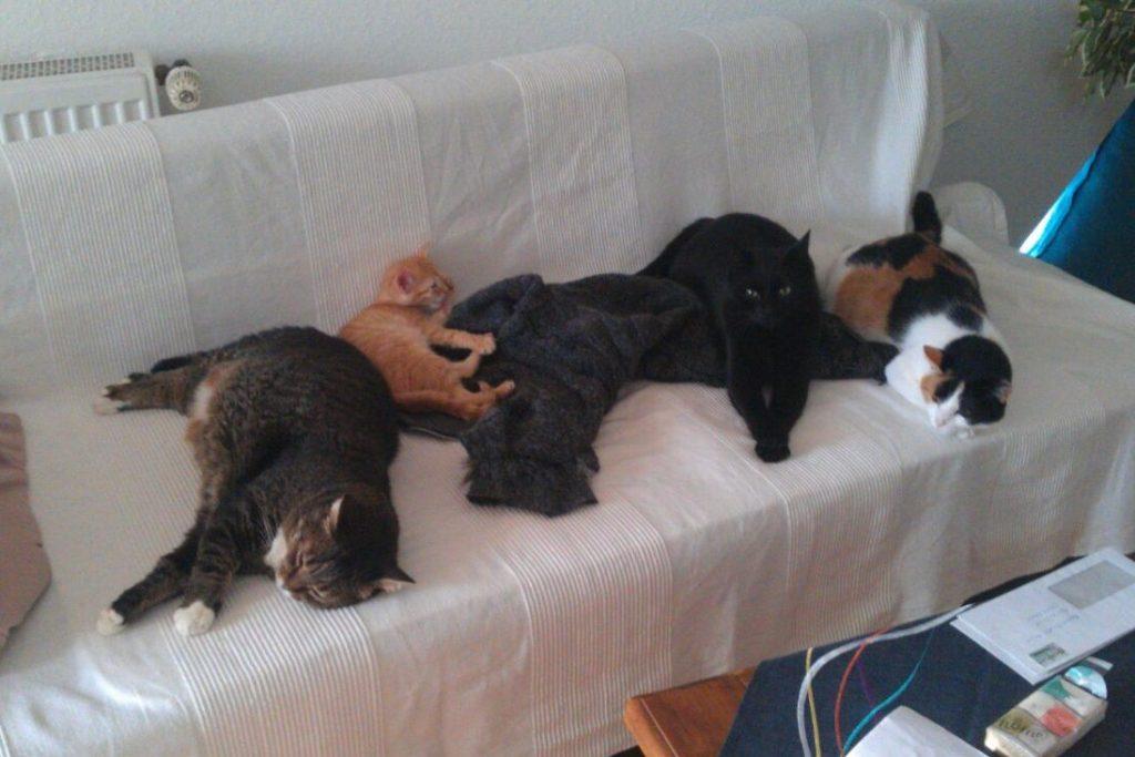 Katze Toulouse und ihre Freunde auf der Pflegestelle