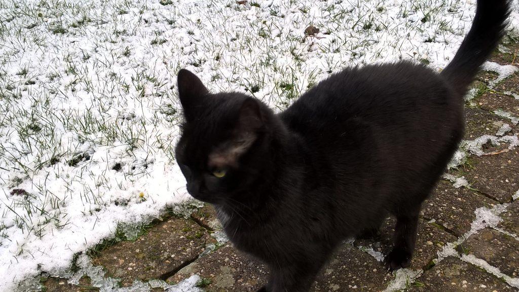 Molly im Schnee