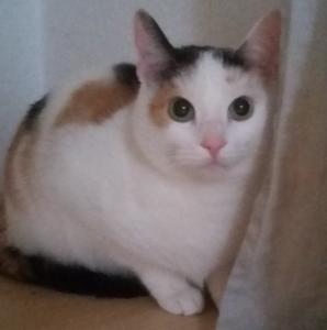 Katze Minette