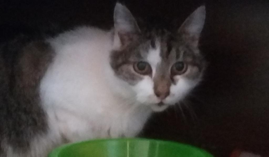 Katze Olivia