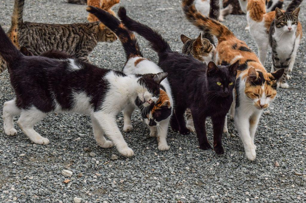 Katzenrudel
