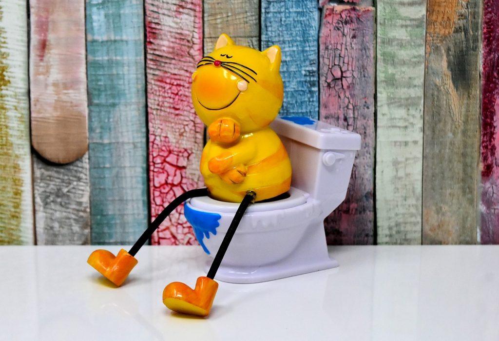 Katze auf Toilette