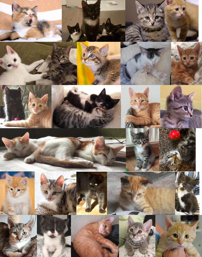 Auswahl vermittelter Kätzchen