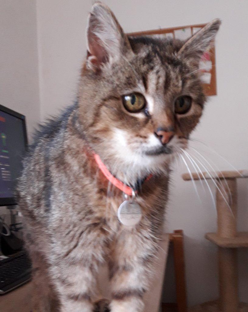 Katze Bastet