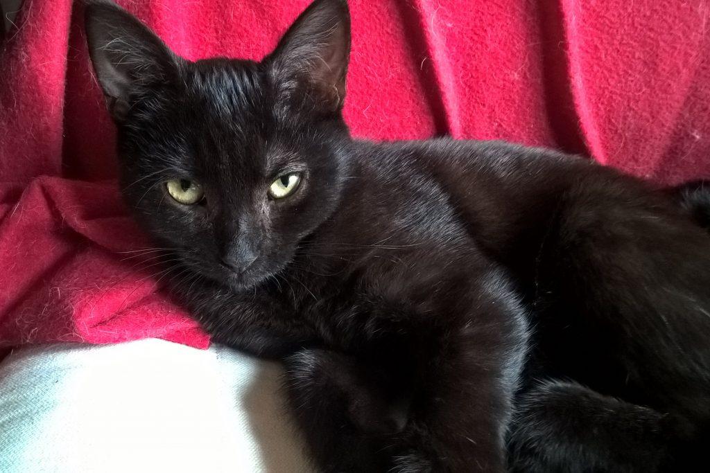 Katze Mira