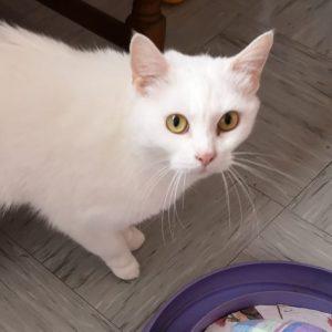 Katze Leni
