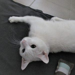 Katze Nele