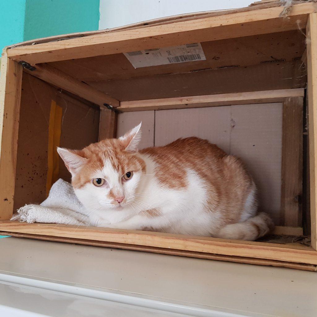 Katzen aus Notfall-Abgabe