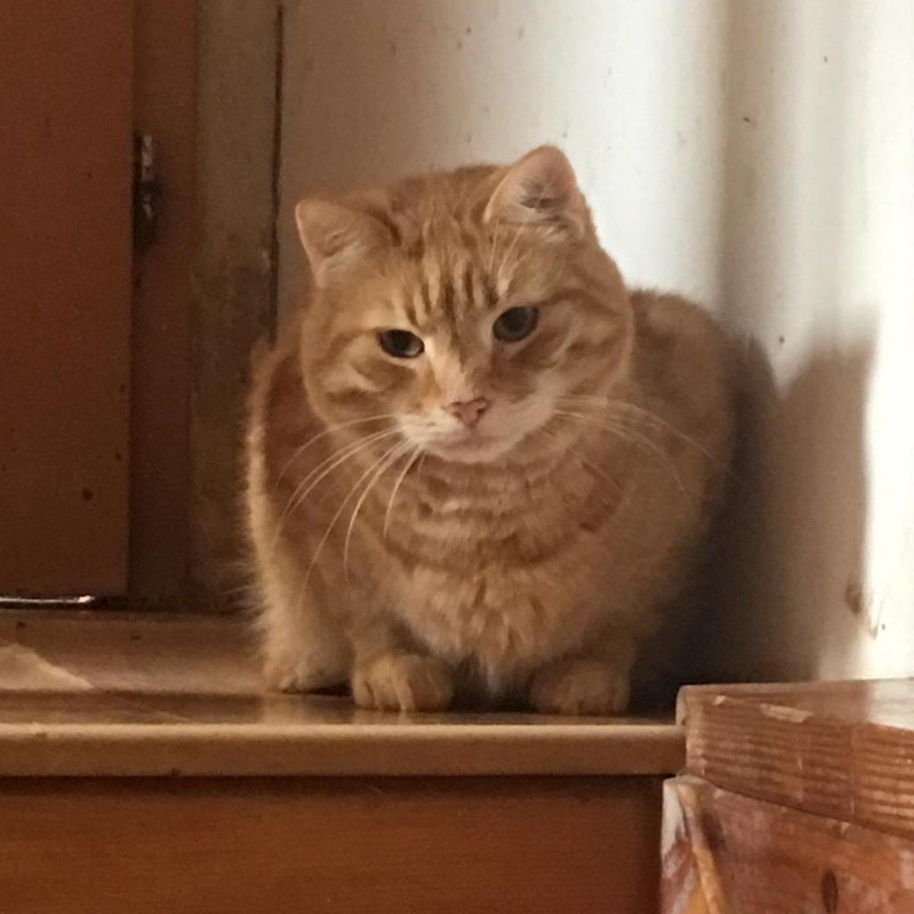 stellvertretend eine der 18 Katzen
