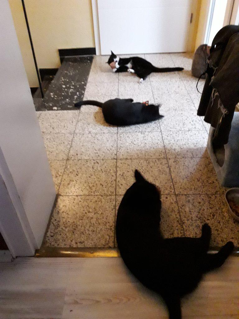 Molly, Mira und Frieda mit Schnuffelkissen