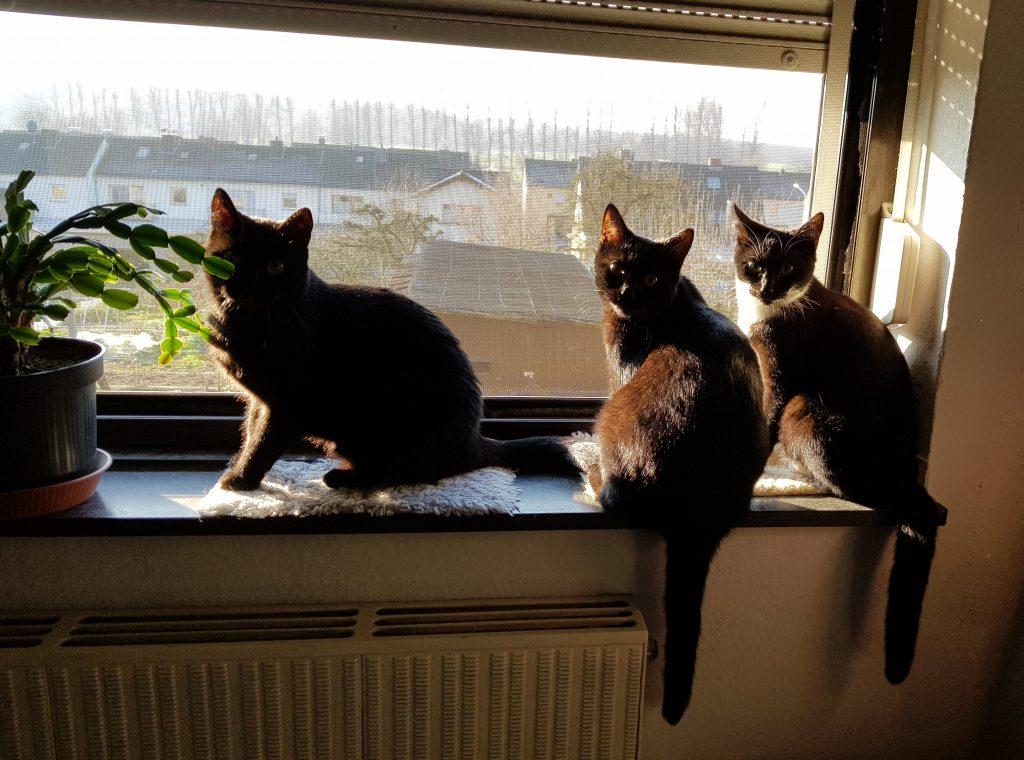 Frieda, Mira und Molly