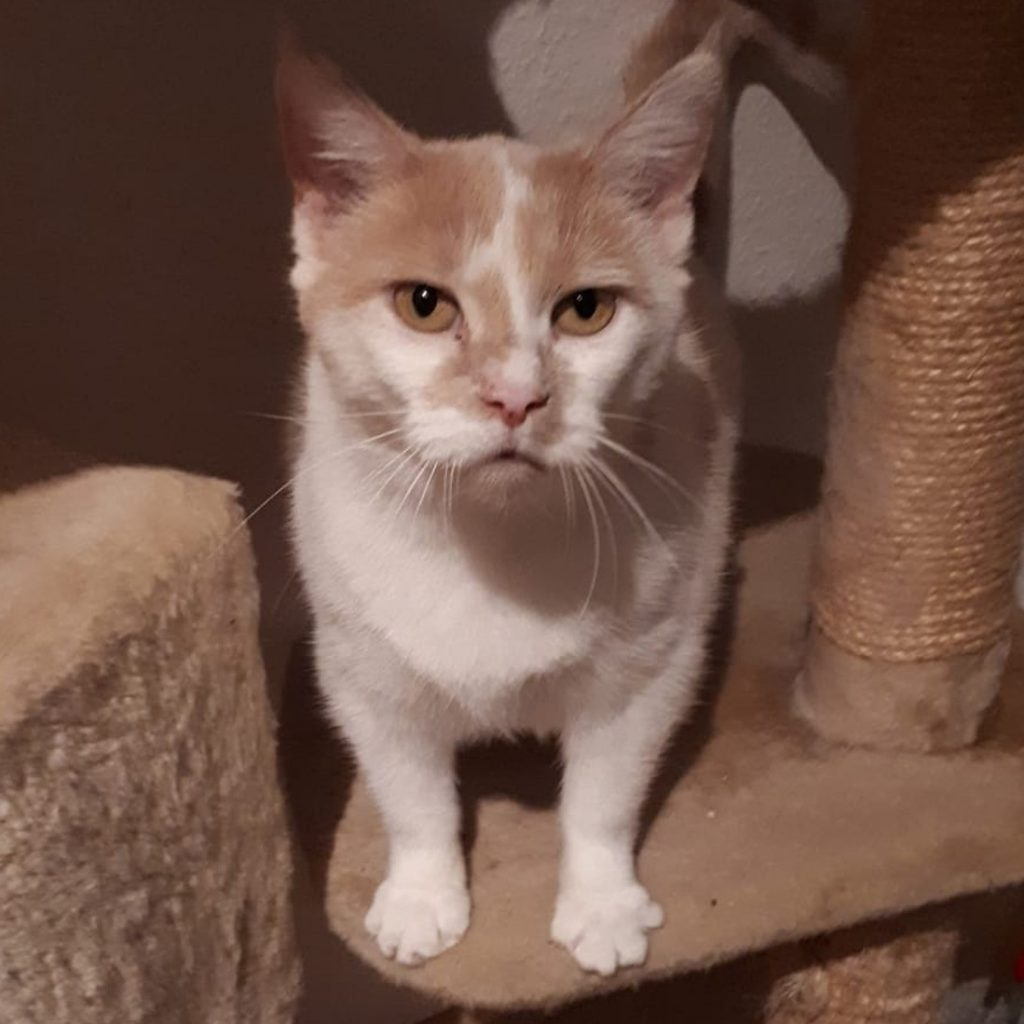 Katze Calida