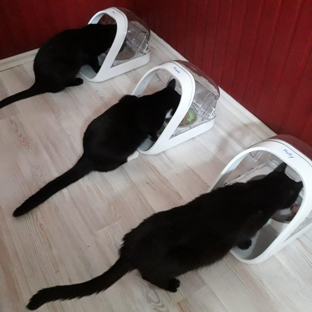 Molly, Frieda und Mira beim Fressen