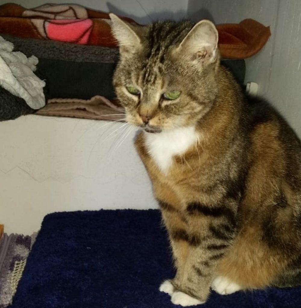 Katze Lisa