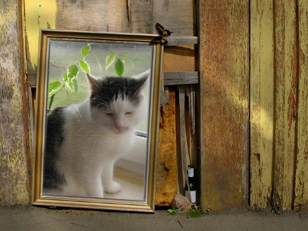 Stillleben Katze