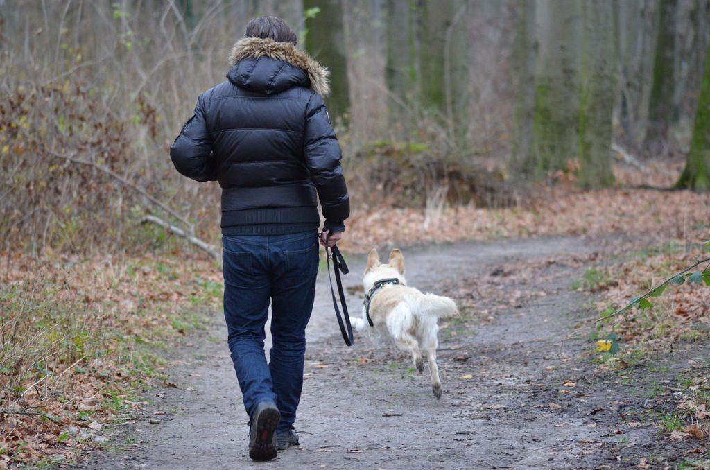 eine Person geht mit Hund gassi