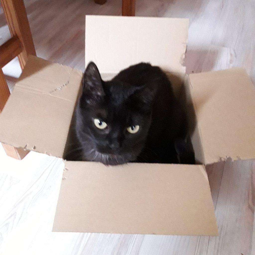 Molly im Karton