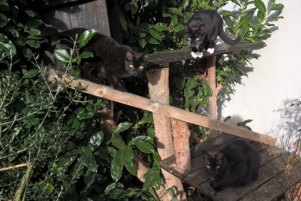 Mira, Frieda und ich beim Klettern...