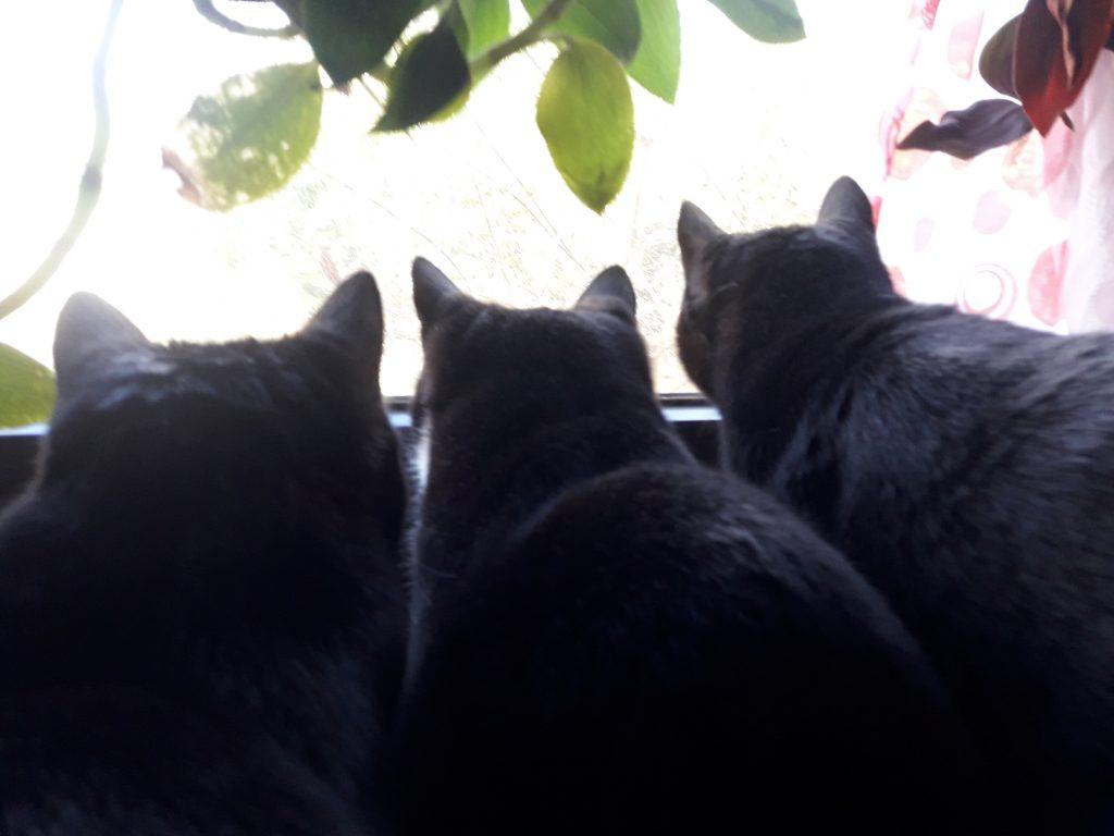 Im Nistkasten vorm Küchenfenster sind Blaumeisen eingezogen. Wir sind gefesselt.