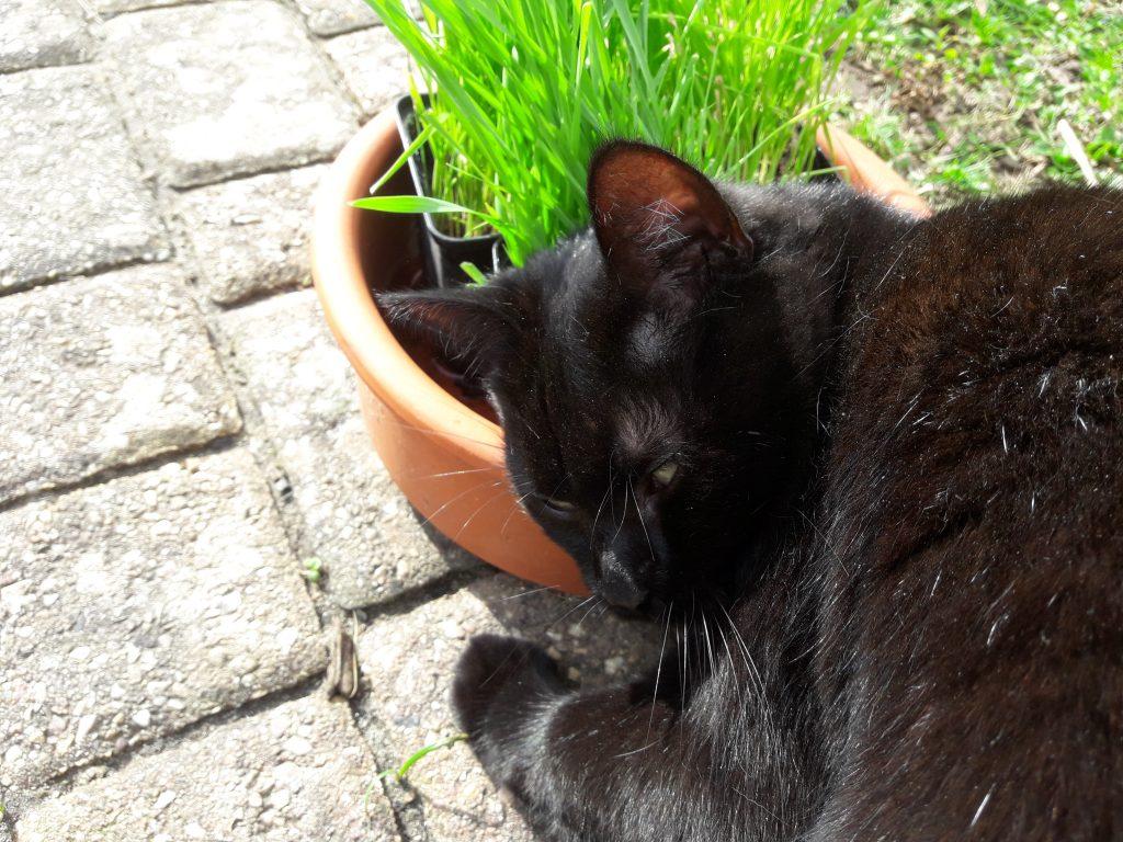 Mira liebt frisches Katzengras.