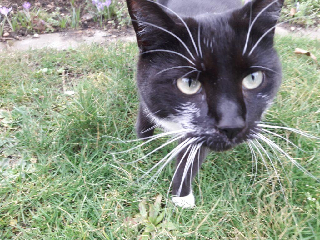 Frieda streift aufmerksam durch den Garten.