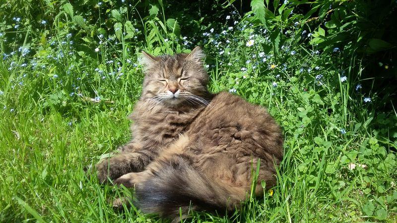 Katze sonnt sich im Gras