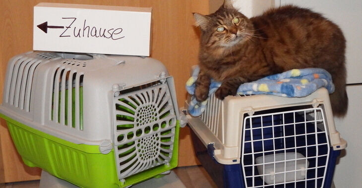 Katze liegt auf Transportkorb
